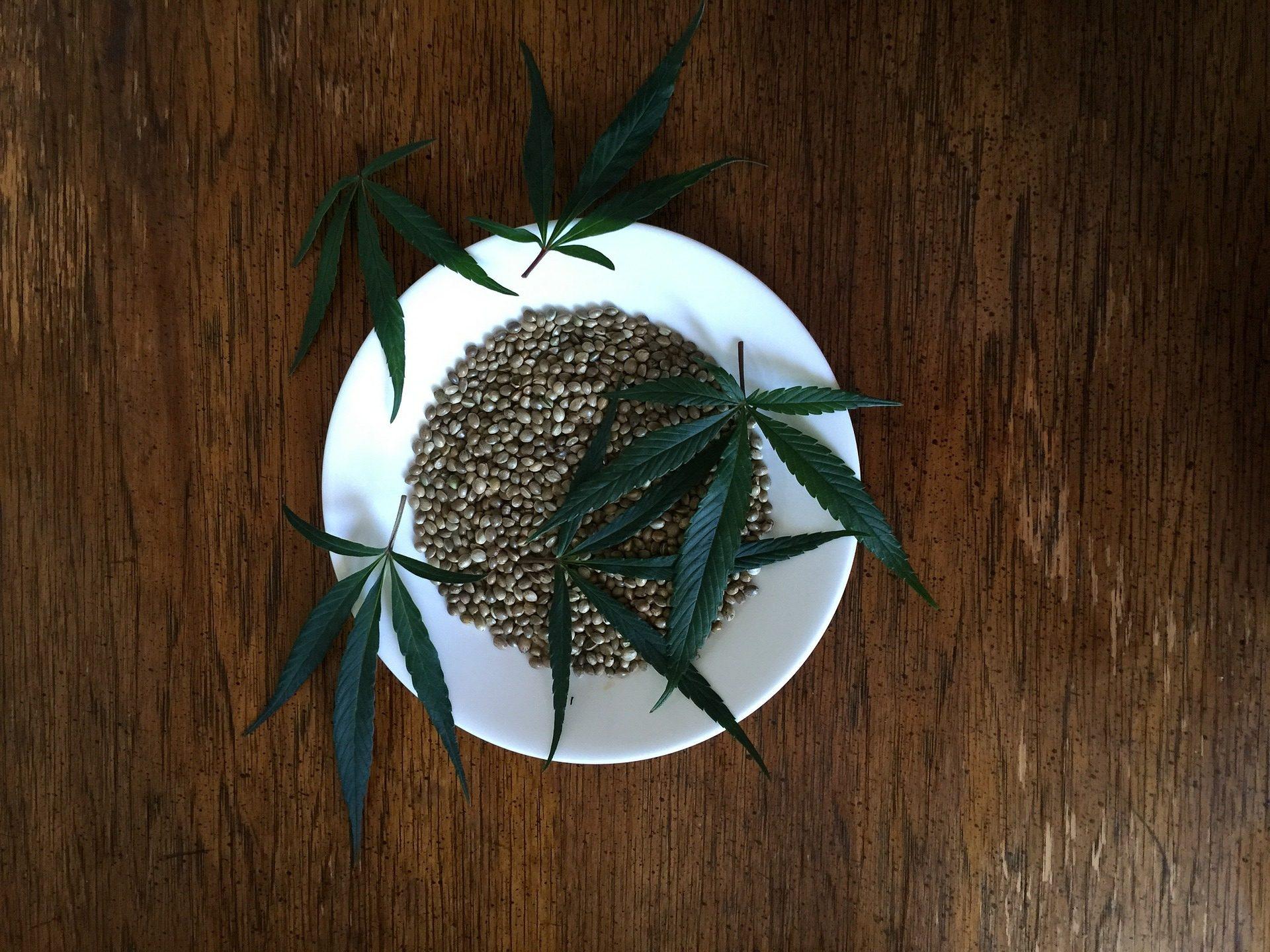 feuilles et graines de cannabis dans assiette blanche